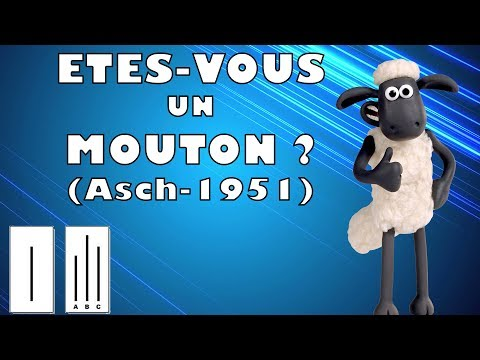 Etes-vous un mouton ? - BrainResearch#1